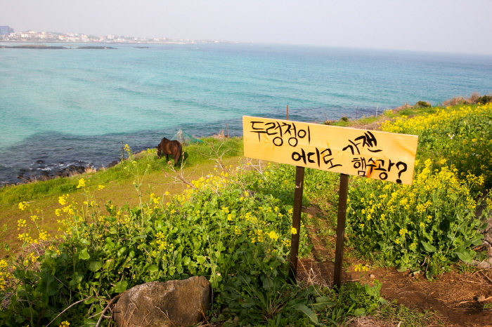 Пляж Хамдок (함덕 서우봉 해변 (함덕해수욕장))5