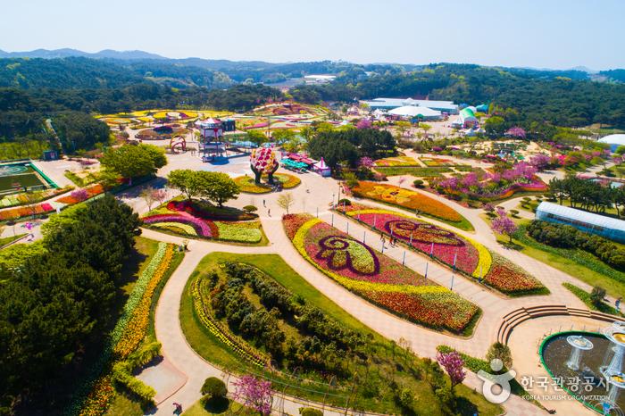泰安 世界チューリップ祭り(태안 세계튤립축제)