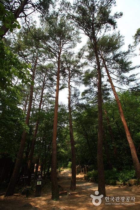 Национальный рекреационный лес Тэгваллён (국립 대관령자연휴양림)15
