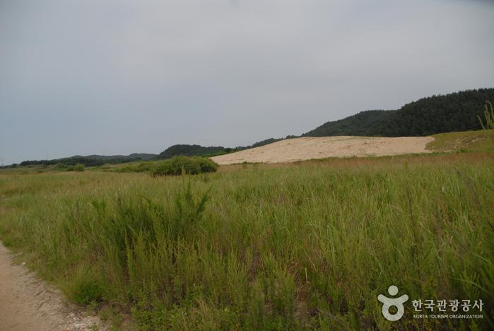 Sinduri Coastal Sand Dune (태안 신두리 해안사구)