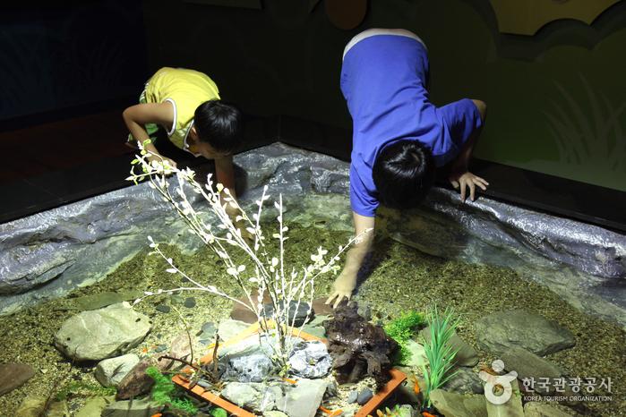 Danuri Aquarium (단양 다누리아쿠아리움)