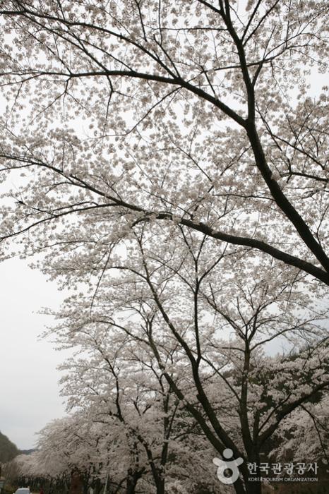 하늘을 뒤덮은 꽃잎들