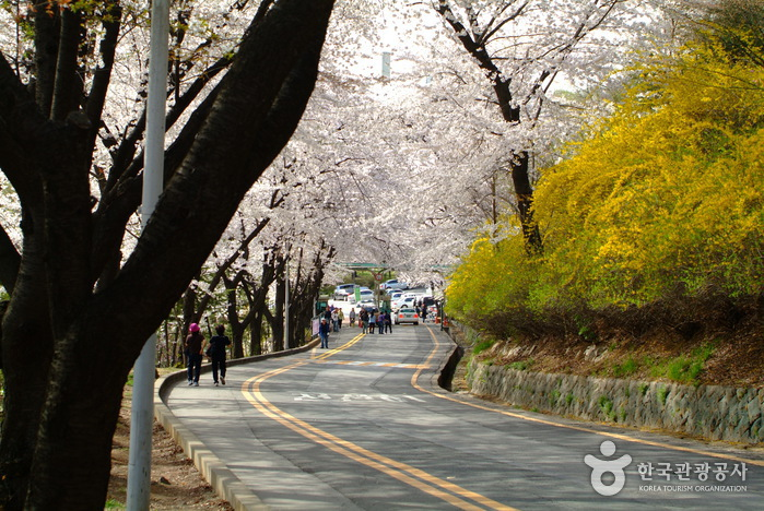 photo about Namsan Park