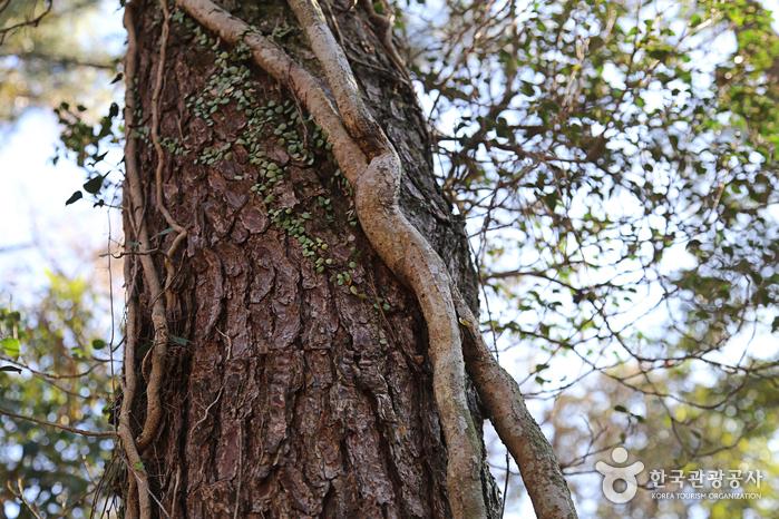 환상숲 곶자왈공원