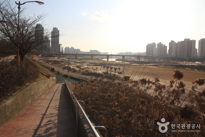 Anyangcheon Stream (안양천)