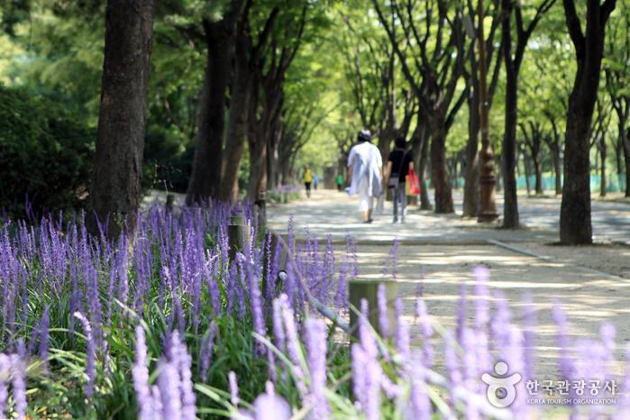 대공원 산책로에 핀 맥문동 꽃