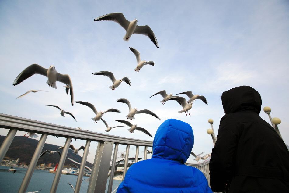 대변항에서 만난 붉은부리갈매기