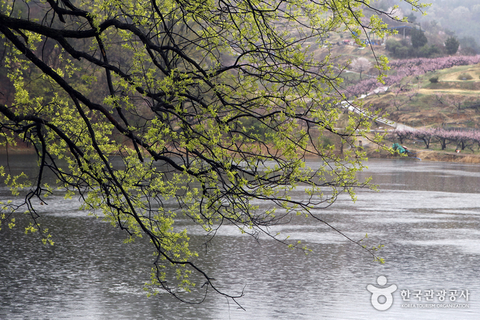 비 오는 날의 반곡지 풍경