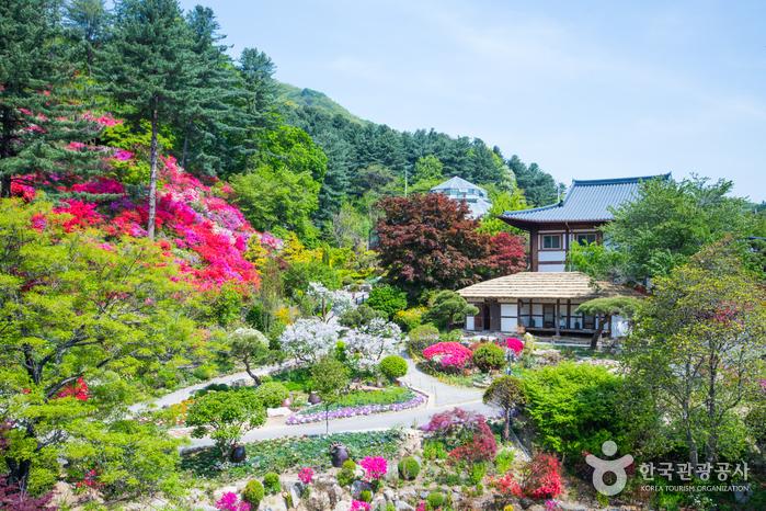 Сад утреннего спокойствия (아침고요수목원)3