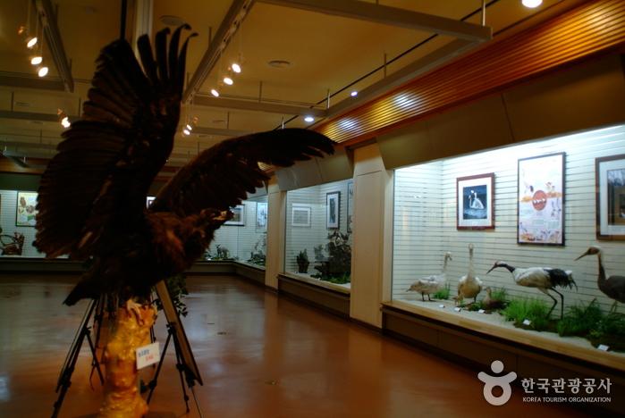 Музей лесного хозяйства провинции Канвон-до (강원도 산림박물관)