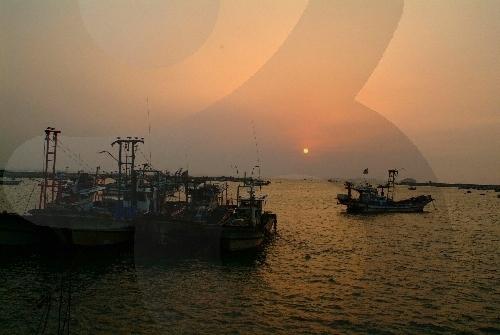 궁평항 사진4