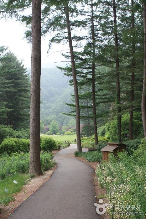아침고요수목원 사진41