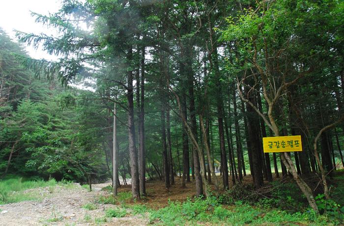 Chemin forestier Geumgang Sonamu à Uljin...