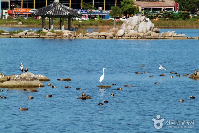 Gyeongpoho Lake (...