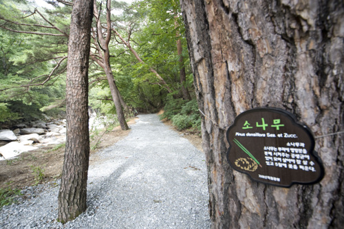 Haeinsa Temple (해인사)