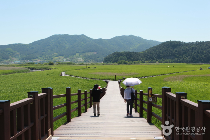 순천만습지 (구, 순천만자연생태공원) 사진6
