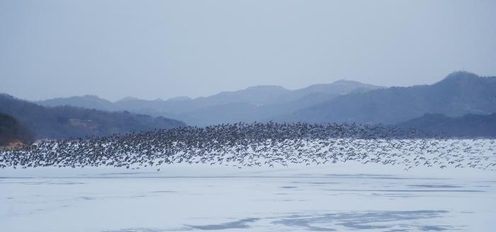 토교저수지(철새도래지)