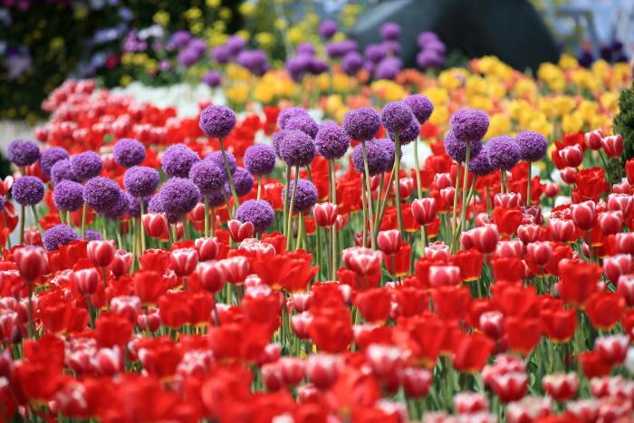 高陽國際花卉博覽會(고양국제꽃박람회) 이미지