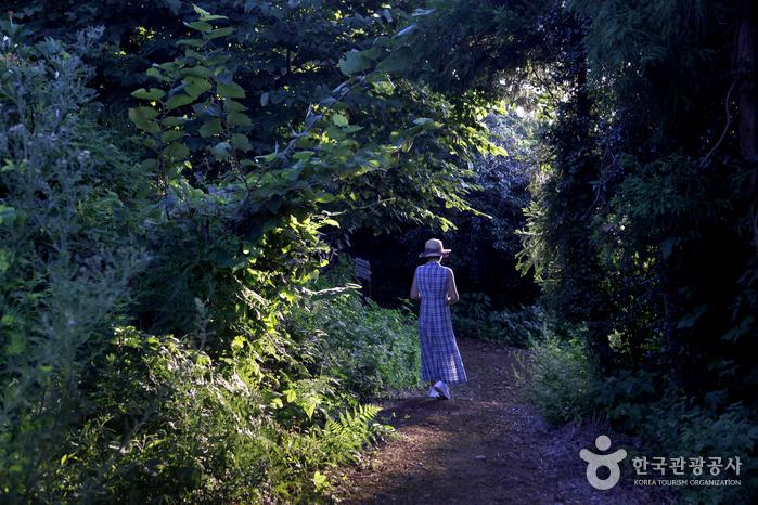 숲이 우거져 시원한 산길