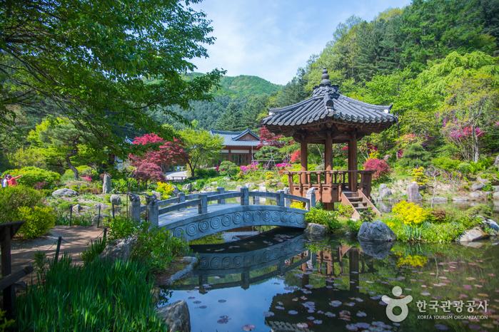 Сад утреннего спокойствия (아침고요수목원)4