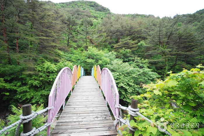 国立加里王山自然休養林(국립 가리왕산자연휴양림)