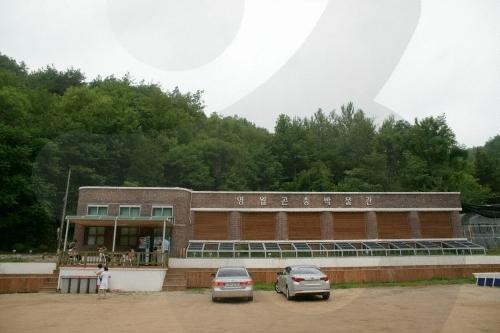 영월곤충박물관
