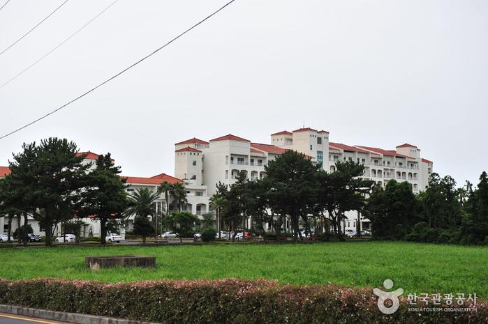 济州锦湖度假村(제주금호리조트)