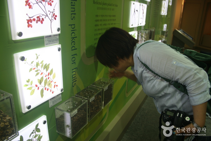 大邱藥令市韓醫藥博物館(대구 약령시 한의약박물관)23