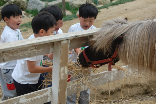 Daegwallyeong Donkey Ranch Don Quixote (대관령당나귀목장 돈키호테)