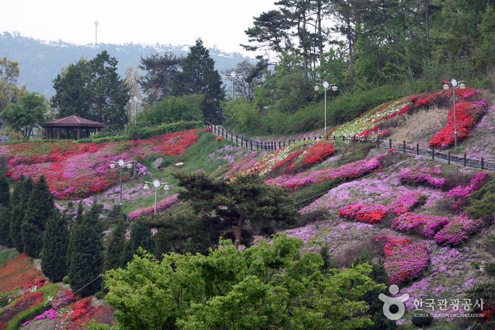 법성포에 날리는 꽃향기의 근원지, 영광 숲쟁이꽃동산