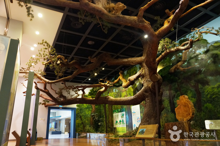 Natural Heritage Center in Daejeon(천연기념물센터 (대전))