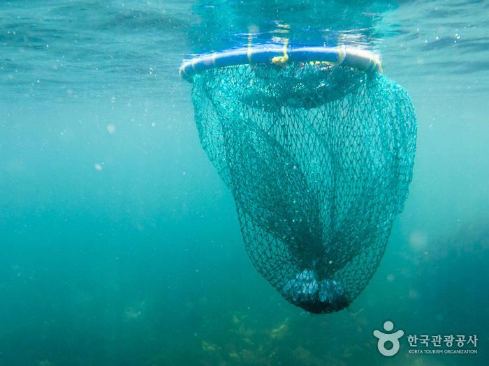 채취한 해산물은 망사리에 넣어둔다.