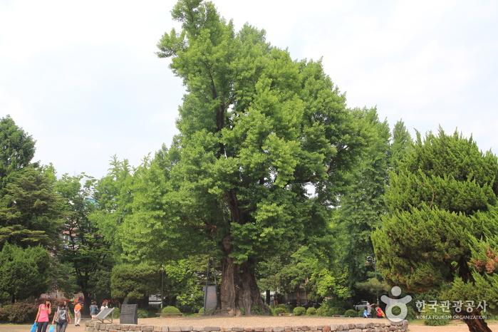 Jungang Park (청주 중앙공원)