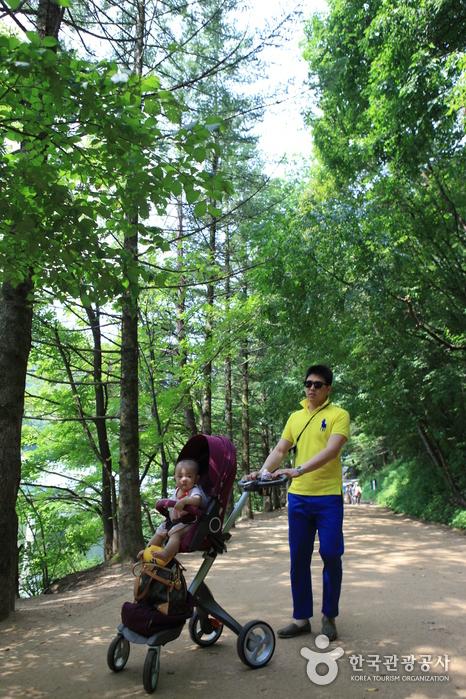 아이릍 태운 유모차로도 무리없이 걸을 수 있는 전나무숲