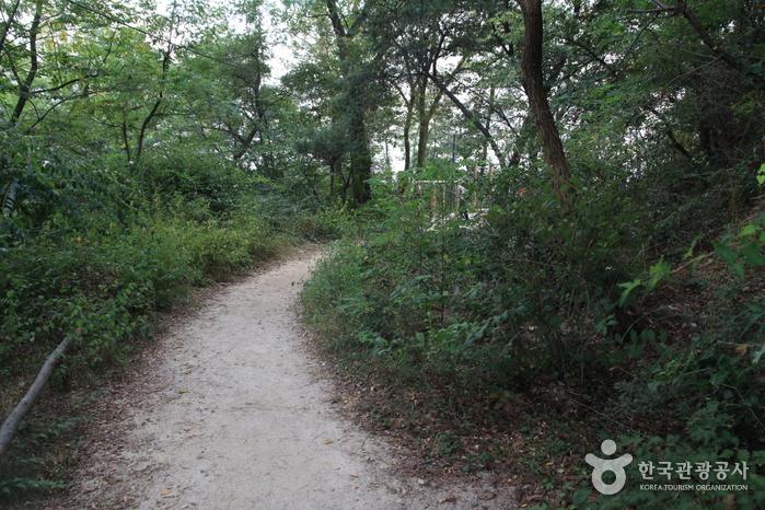 [북악하늘길 3산책로] 북카페~숲속다리