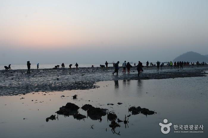 珍島神秘の海割れ(진도 신비의 바닷길)