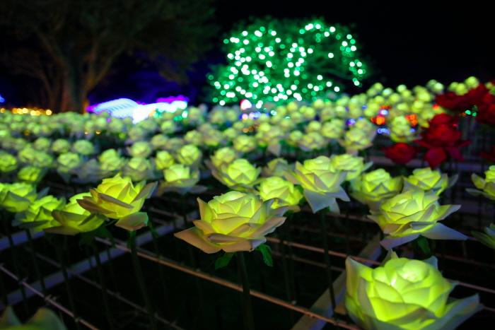 제주장미빛축제 365일테마파크 사진16