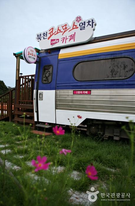 실제 기차를 카페로 리모델링한 북천 코스모스 열차 카페
