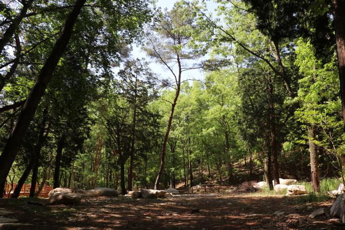 국립대운산치유의숲