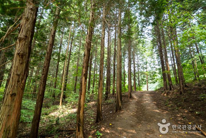 Chungnyeongsan Recreational Forest (축령산자연휴양림)