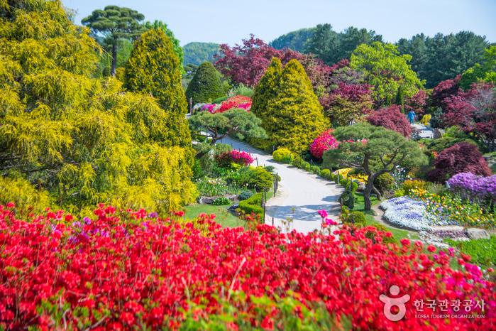 Сад утреннего спокойствия (아침고요수목원)7