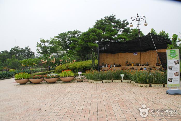 Hanbat Arboretum (한밭수목원)