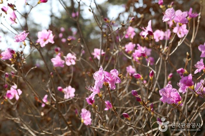 화성 우리꽃식물원  사진4