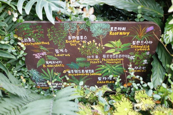 香草世界农园허브나라농원