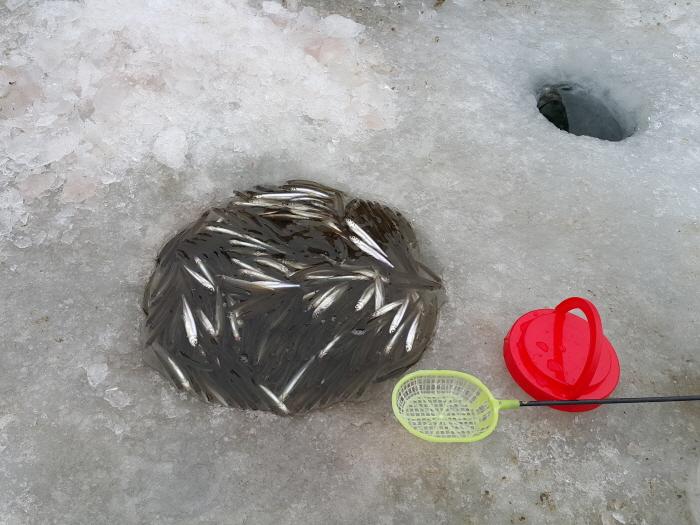 양평 대자연 빙어송어축제 2018 사진7