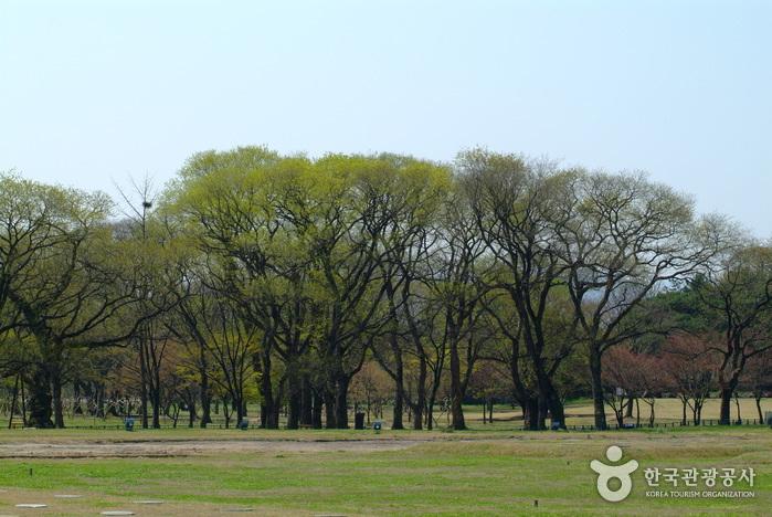 Gyeongju Gyerim Forest (경주 계림)