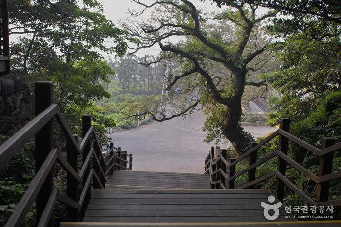 Geumsan Park (Nabeup Forest Path) (금산공원 (납읍난대림지대))