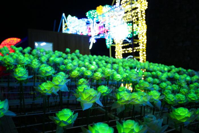 제주장미빛축제 365일테마파크 사진17