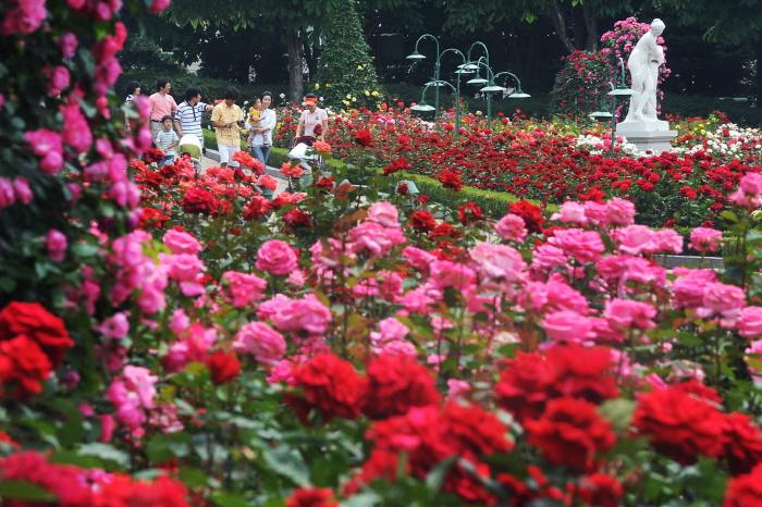 Everland Rose Festival (에버랜드 장미 축제)