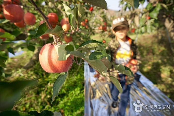 사과나무에 다가오는 어린이